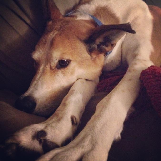 Sad dog picture